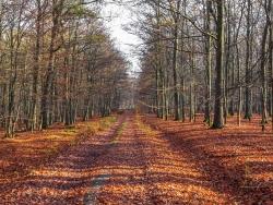 Hainsimsen-Buchenwald