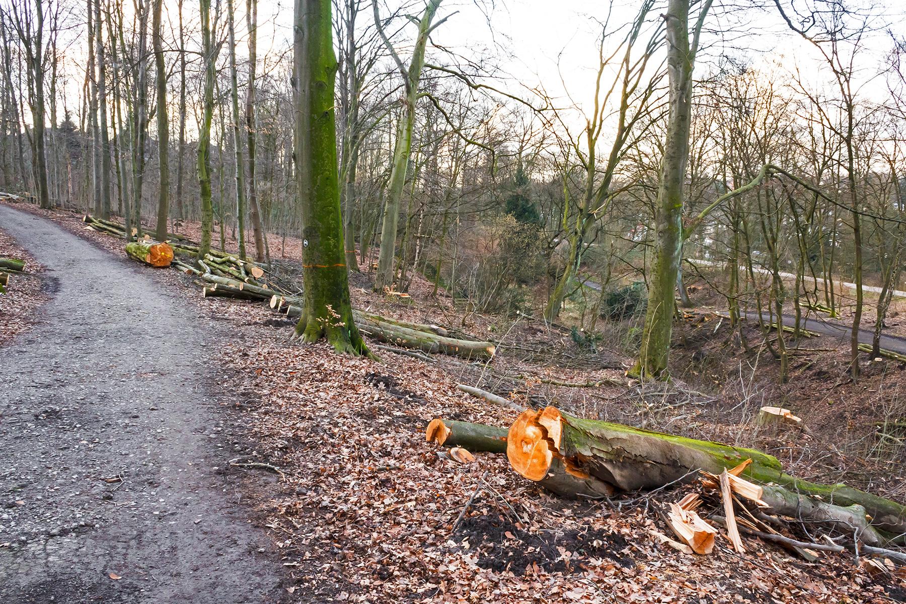 ein paar wenige dicke Bäume bleiben als Alibibäume stehen