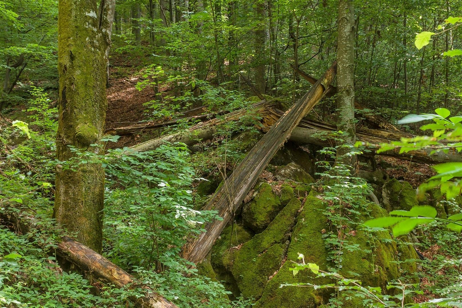 Ausschnitt aus dem Foto oben: dicke Totholzstämme auf bemoosten Großsteinen in einem kleinen Bach