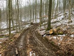 Verwundeter Forstweg mit 50 cm tiefen Bodengleisen