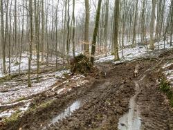 Knöcheltiefer Schlamm und verbreiteter Forstweg