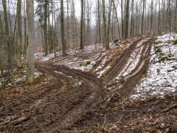 Verwundete Forstwege kreuz und quer durch den Wald