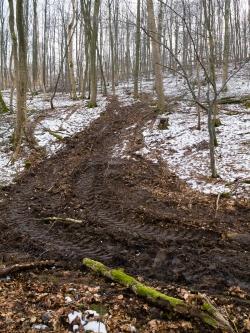 Zerstörter Waldboden