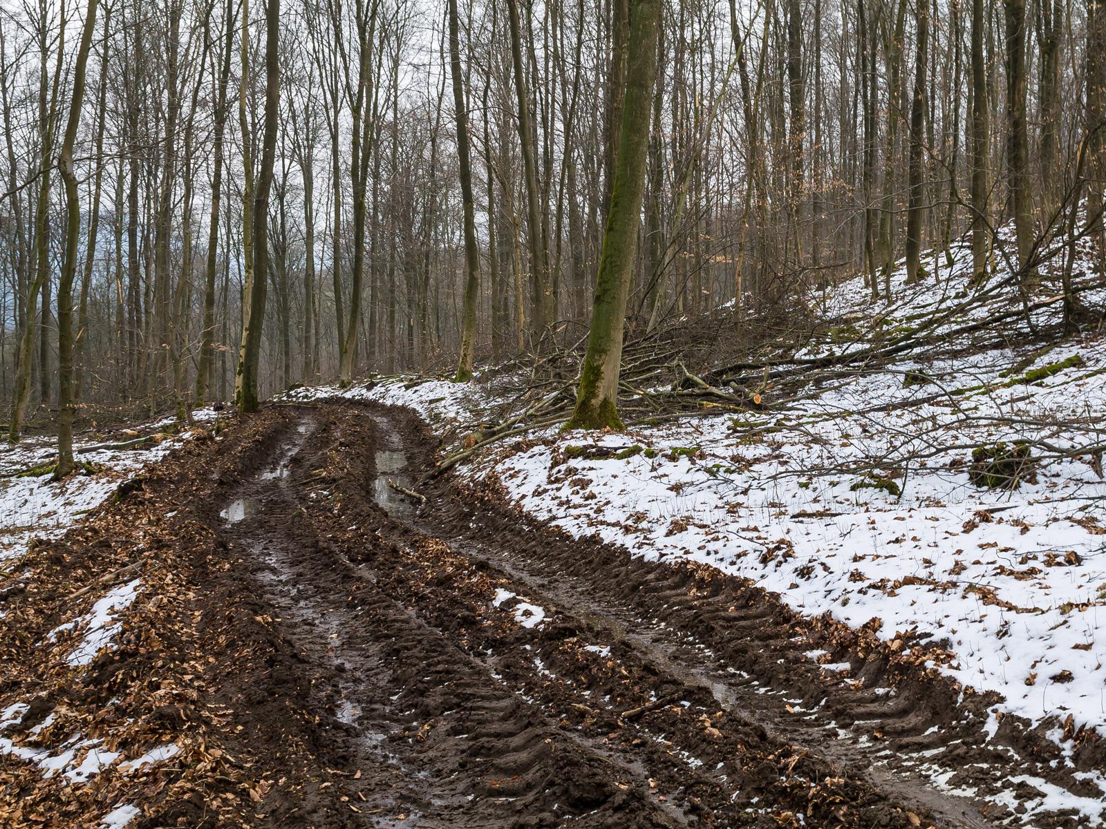 Verwundeter Forstweg mit 30 cm tiefen Bodengleisen