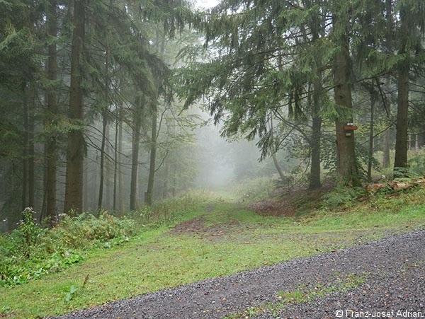 Westweg_Nebel_1