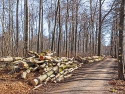 Holzpolter im Wettergrund