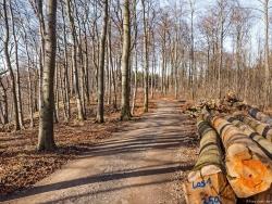 links die Naturwaldzelle Hohenstein, rechts Holzpolter