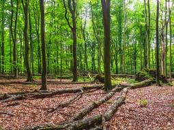 ganz rechts ein noch stehender Totholzbaum
