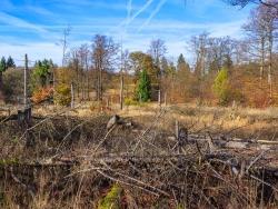 Windwurffläche ohne Pionierbaumarten