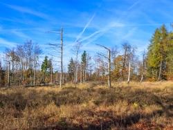 steppenähnliche Graslandschaften durch Wildverbiss