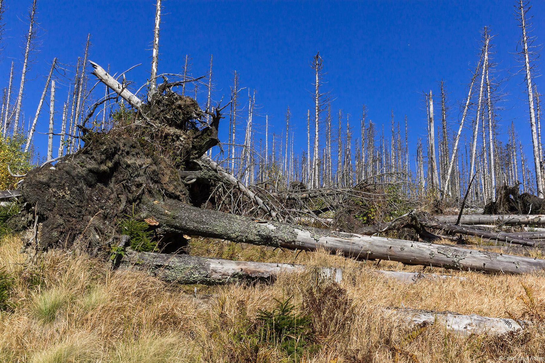 nicht geräumter Windwurf am Lackenberg