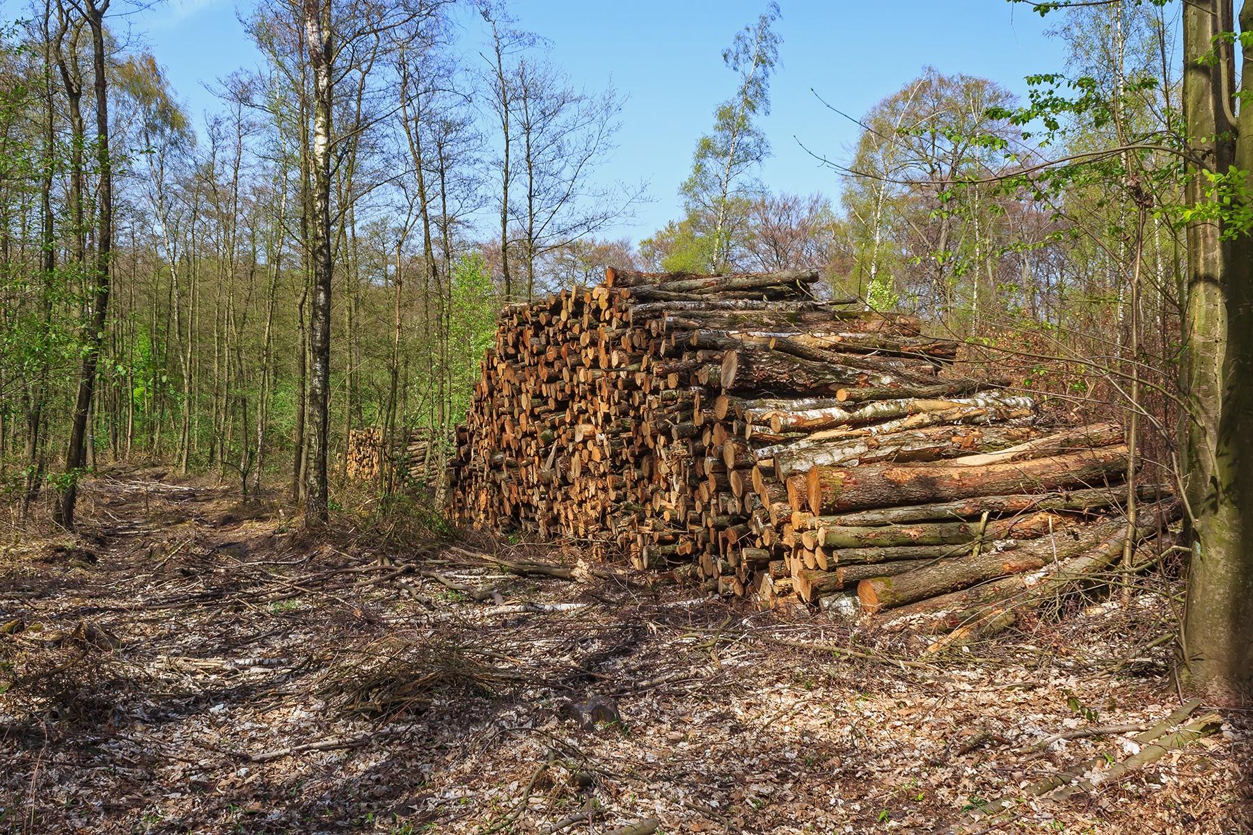 Brennholz-Polter neben Rückegasse