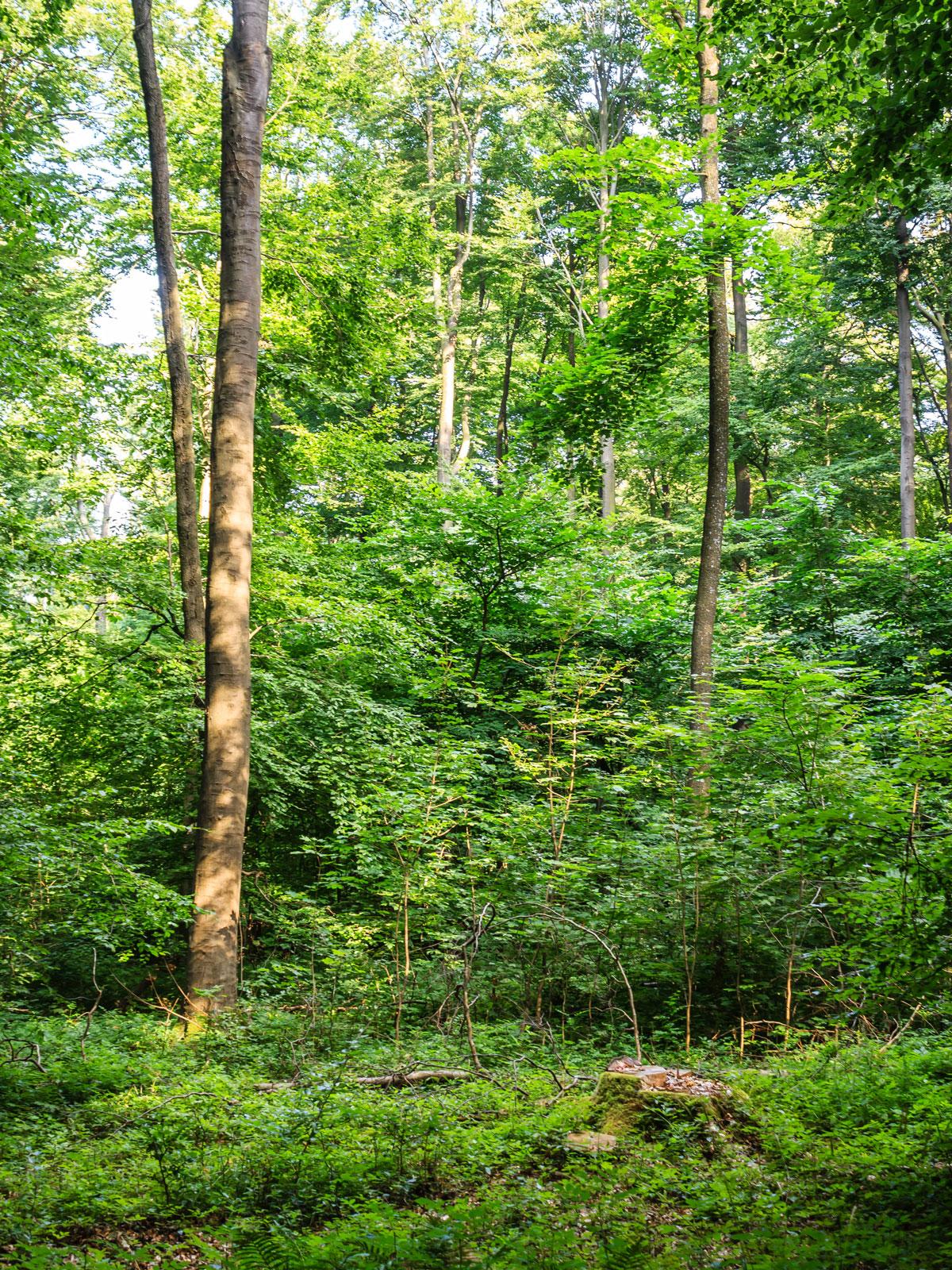 einzelner Baumstumpf im Vordergrund