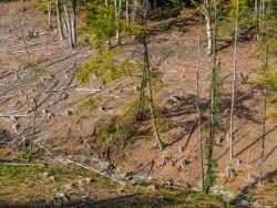 """""""Fichten sind Relikte früherer Forstwirtschaft."""""""