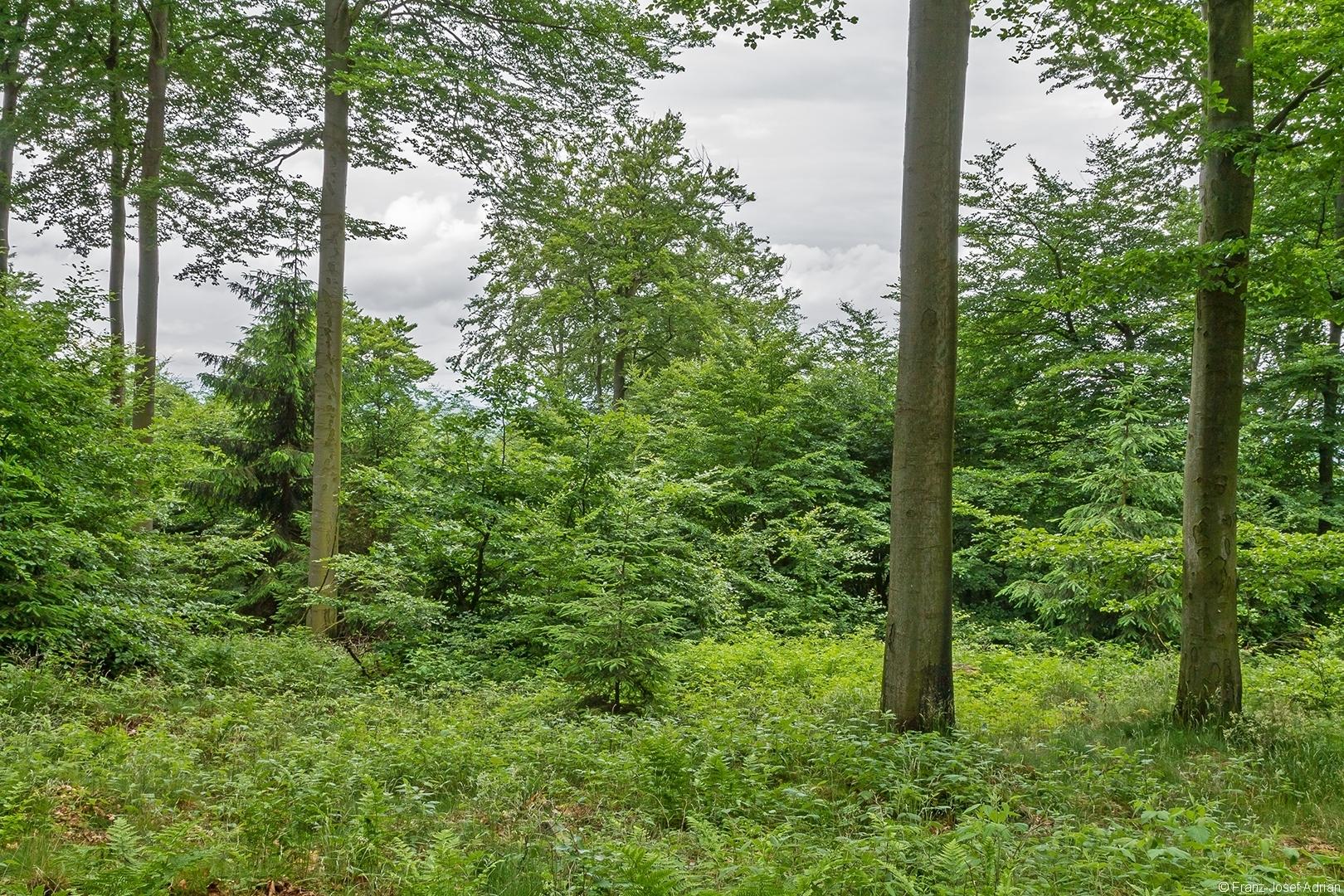 Wuestegarten_Buchen_2