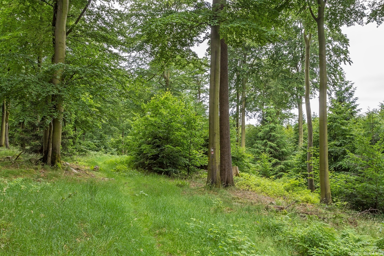 Wuestegarten_Buchen_3