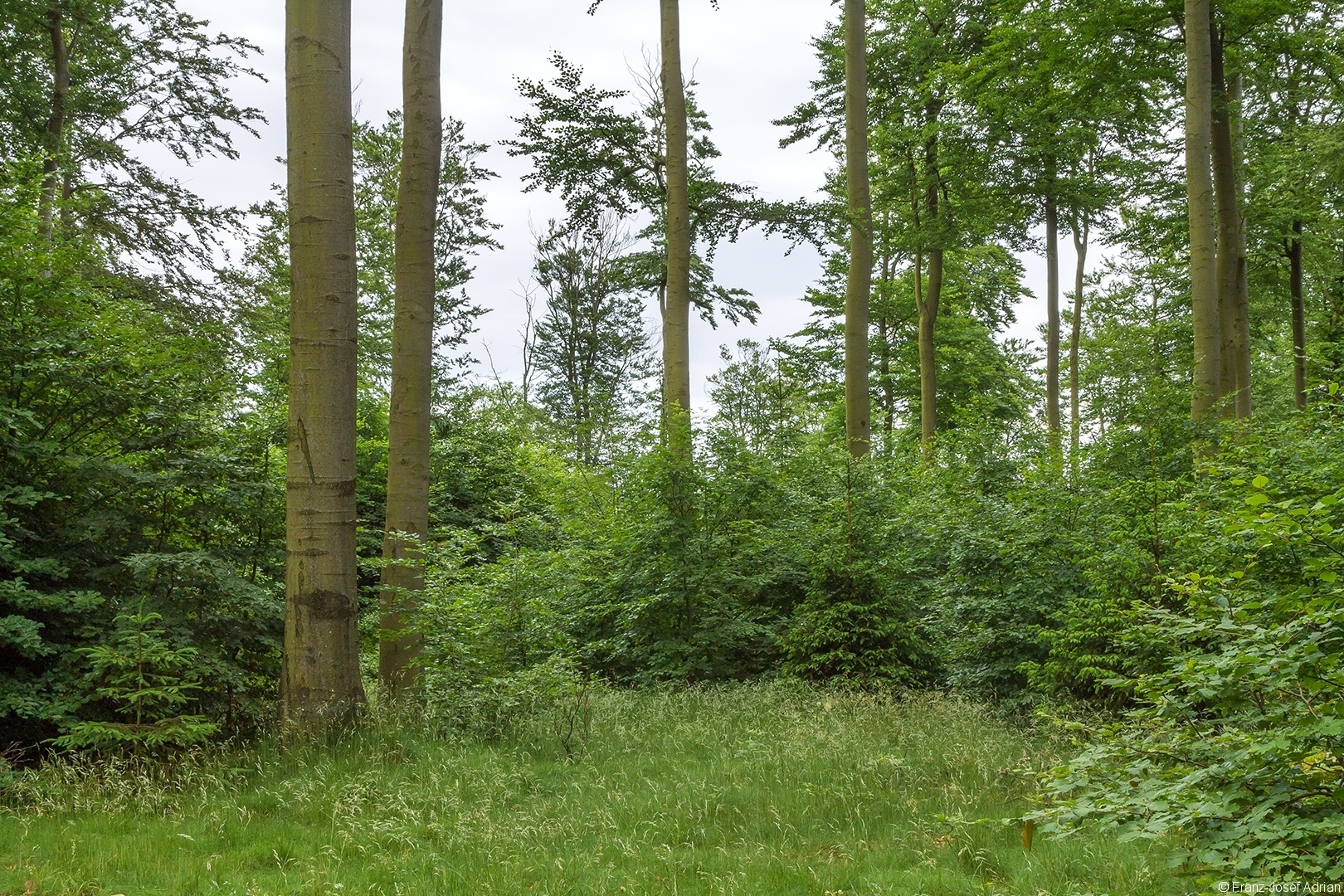 Wuestegarten_Buchen_4
