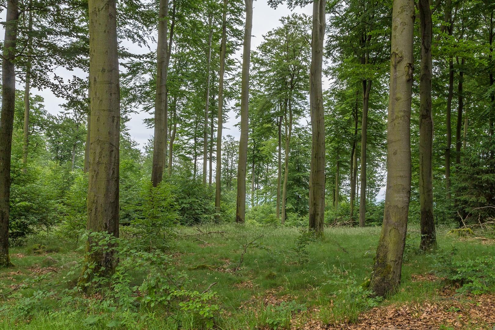 Wuestegarten_Buchen_1