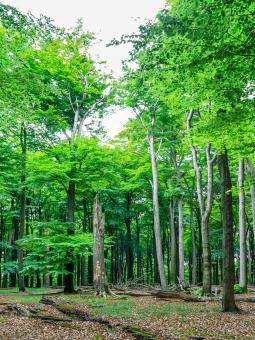 Hochstubben, liegende Totbäume und Starkäste