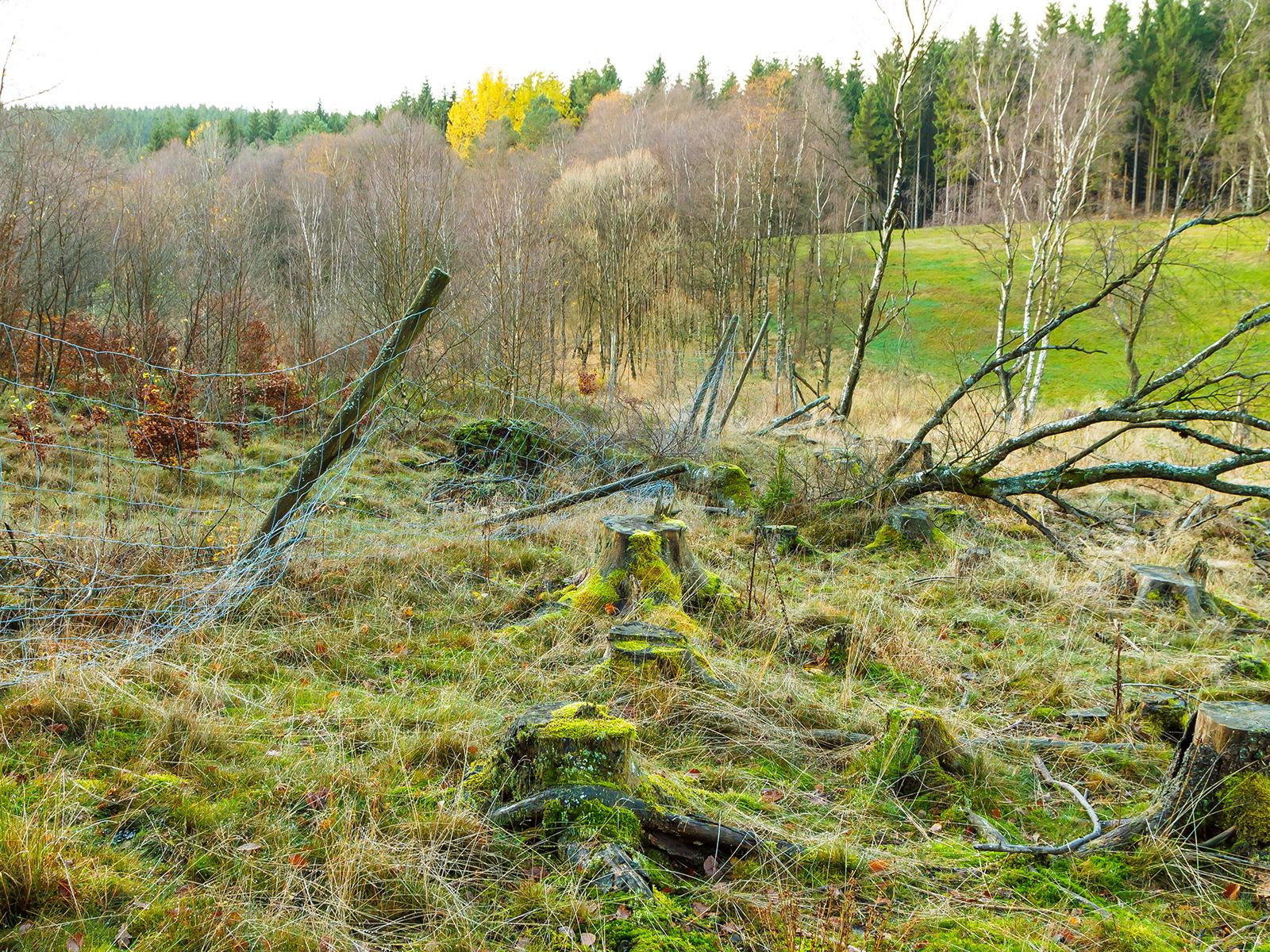 zerstörter Wildschutzzaun