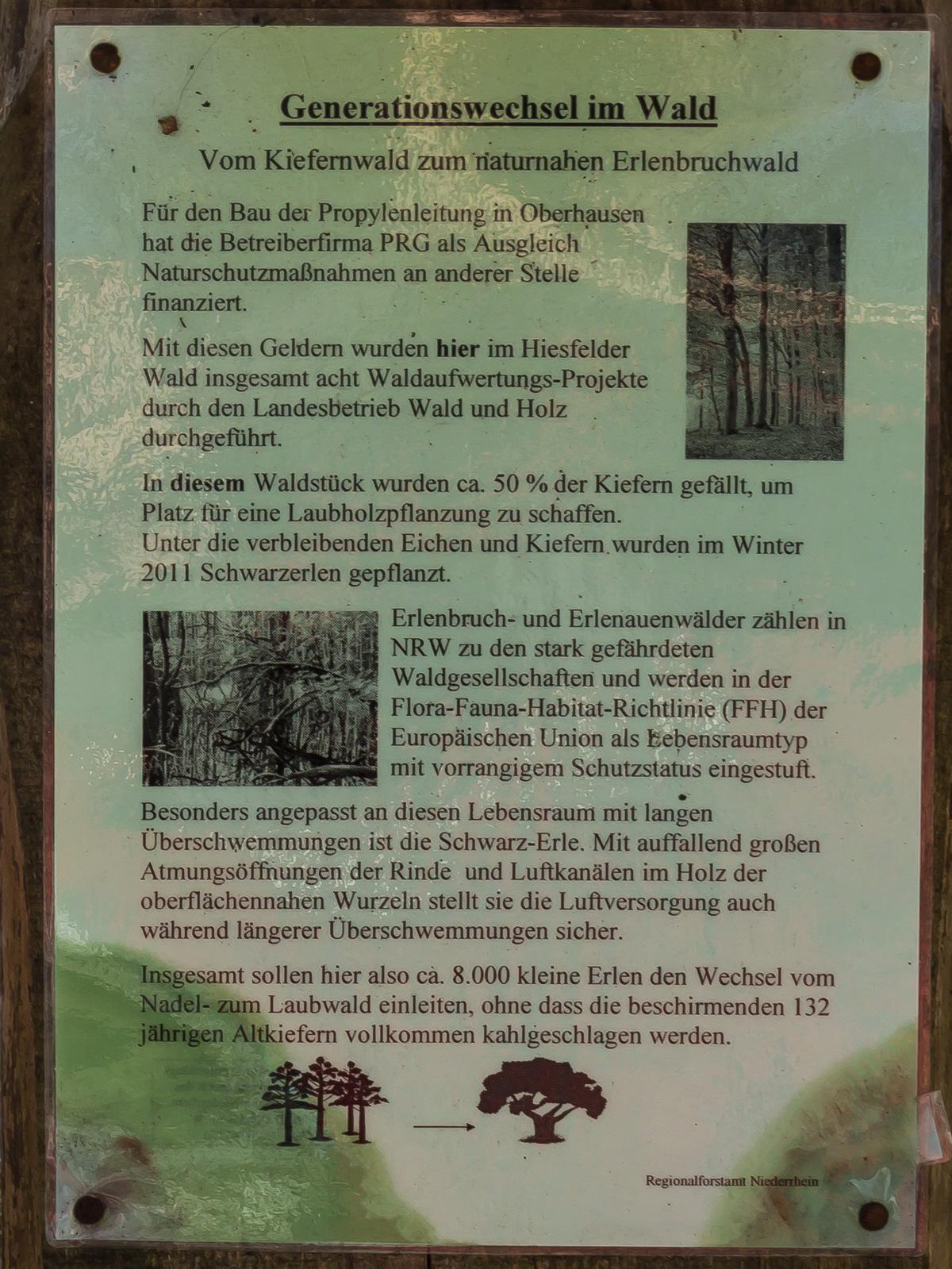 Informationstafel Waldverbesserung