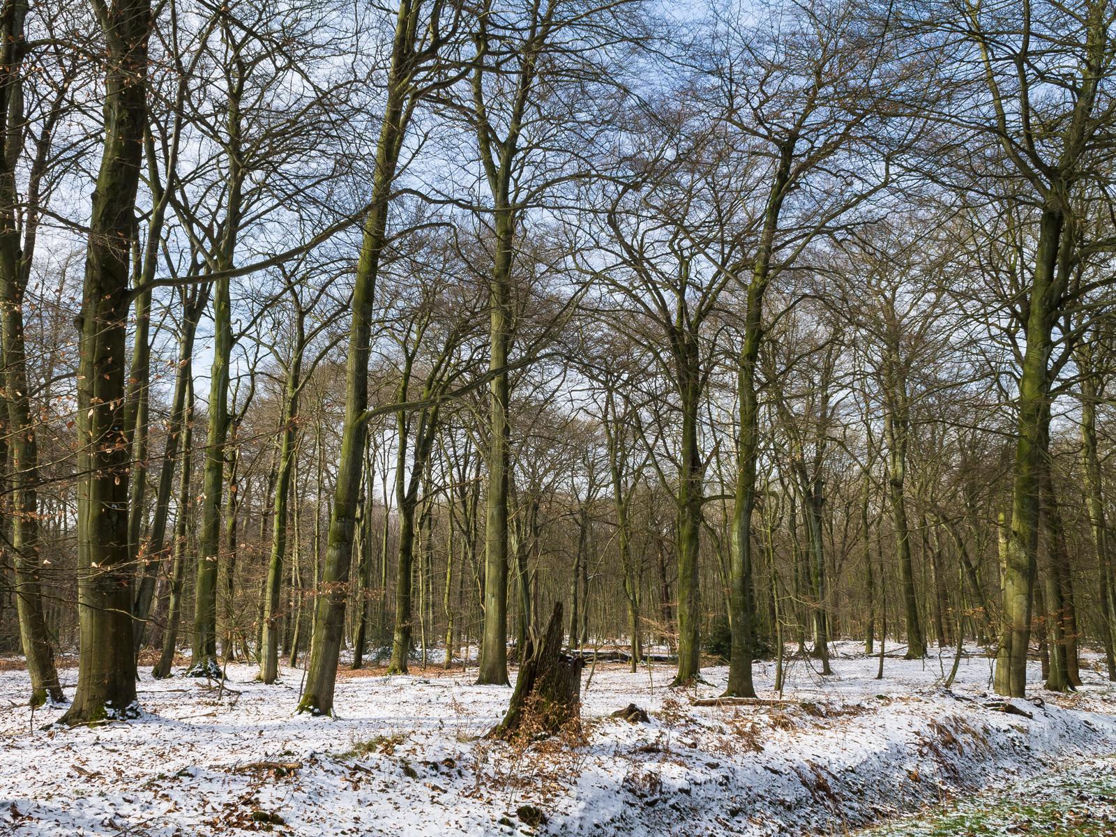 Naturwaldzelle ohne Verjüngung