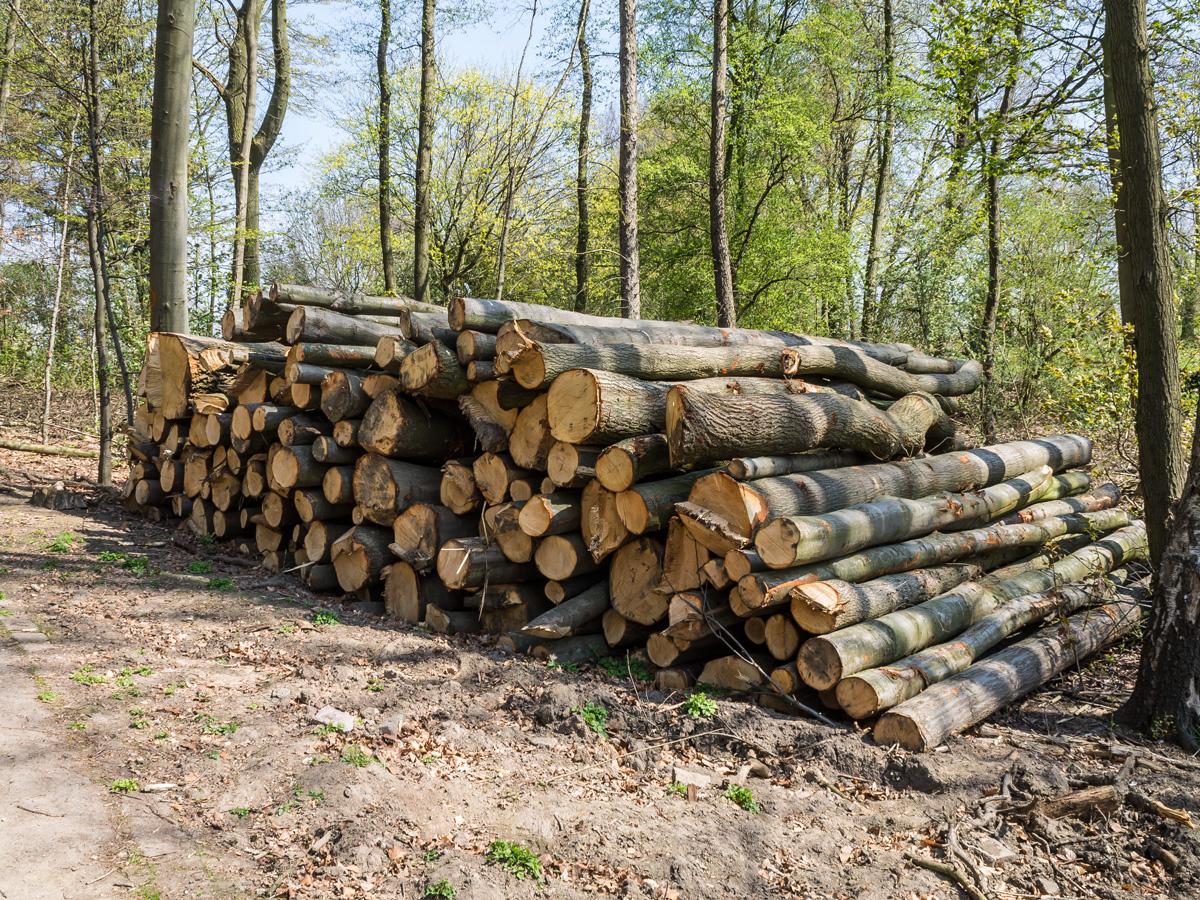 Holzstapel im Hallopark