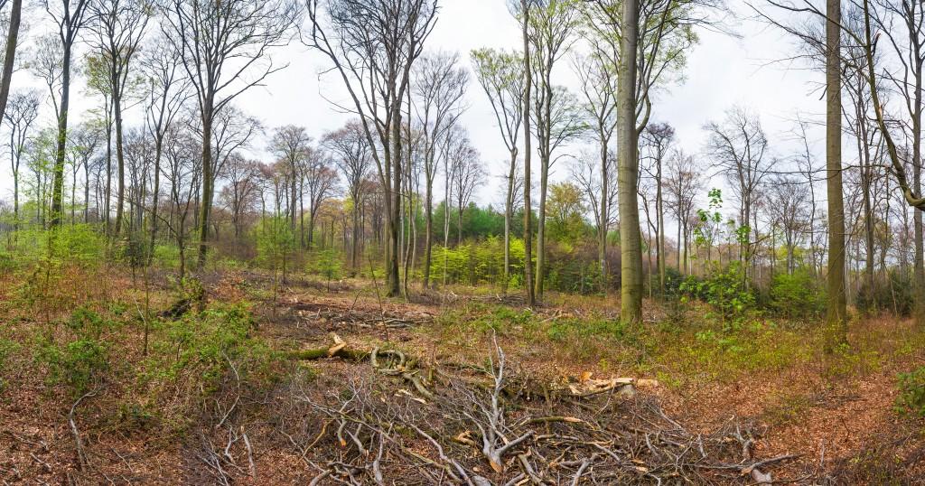 Panoramafoto: Baumfällungen im Bottroper Stadtpark