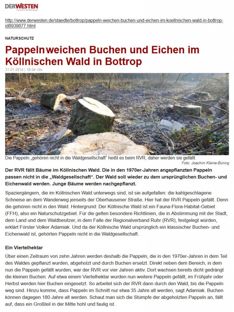 Pappeln_1