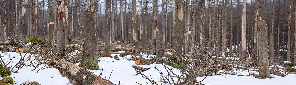 Wälder in Deutschland