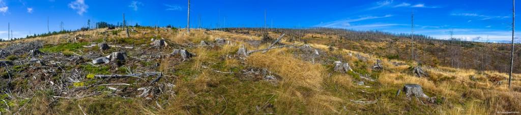 Riesenkahlschlag am Rindelloch im Erweiterungsgebiet des NLP Bayerischer Wald